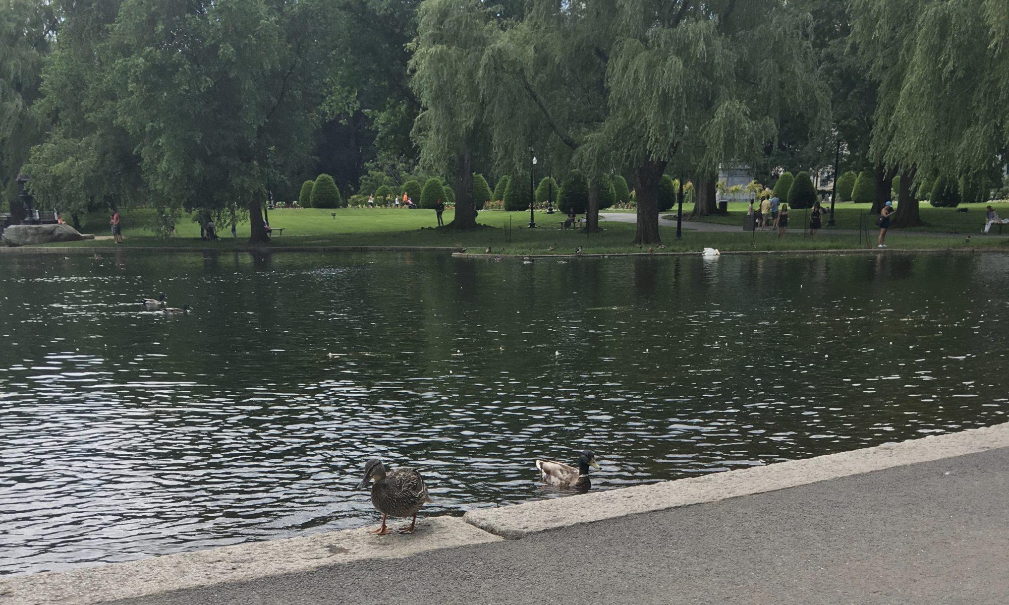wandering in Boston so many stories